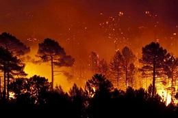 Incendios forestales y emisiones de gases de efecto invernadero